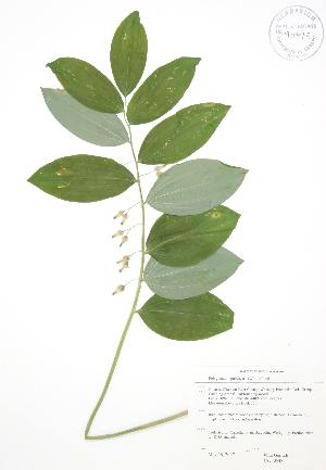 ( - JAG 0548)  @11 [ ] Copyright (2009) Steven Newmaster University of Guelph BIO Herbarium