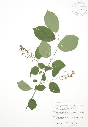 ( - JAG 0556)  @11 [ ] Copyright (2009) Steven Newmaster University of Guelph BIO Herbarium