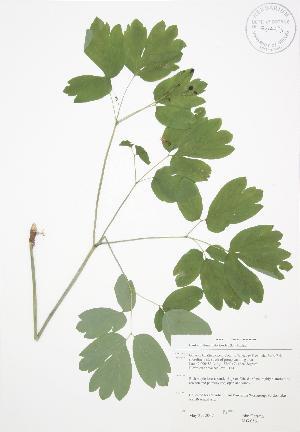 ( - JAG 0561)  @11 [ ] Copyright (2009) Steven Newmaster University of Guelph BIO Herbarium