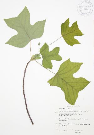 ( - JAG 0567)  @11 [ ] Copyright (2009) Unspecified University of Guelph BIO Herbarium