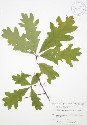 ( - JAG 0585)  @11 [ ] Copyright (2009) Steven Newmaster University of Guelph BIO Herbarium