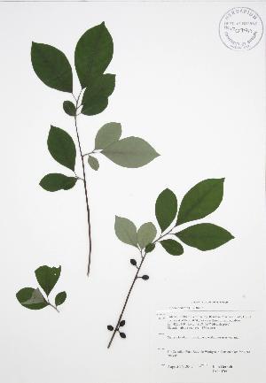 ( - JAG 0760)  @11 [ ] Copyright (2009) Steven Newmaster University of Guelph BIO Herbarium