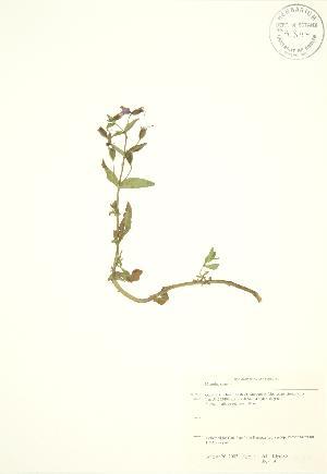 ( - JK 059)  @11 [ ] Copyright (2009) Unspecified University of Guelph BIO Herbarium