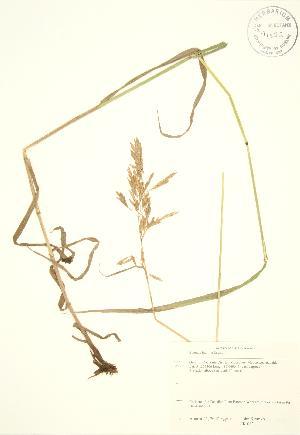 ( - JK 083)  @11 [ ] Copyright (2009) Steven Newmaster University of Guelph BIO Herbarium