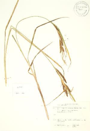 ( - JK 098)  @11 [ ] Copyright (2009) Steven Newmaster University of Guelph BIO Herbarium