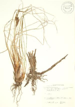( - JK 043)  @11 [ ] Copyright (2009) Steven Newmaster University of Guelph BIO Herbarium