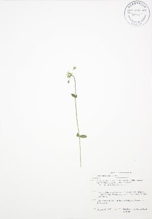 ( - BAR090)  @11 [ ] Copyright (2009) Steven Newmaster University of Guelph BIO Herbarium