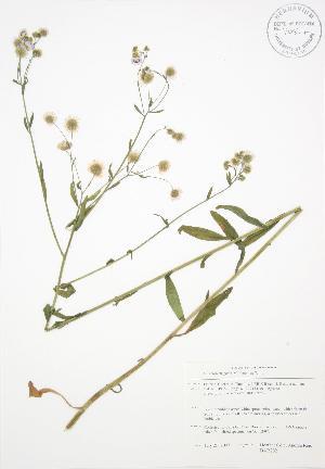 ( - BAR202)  @11 [ ] Copyright (2009) Unspecified University of Guelph BIO Herbarium
