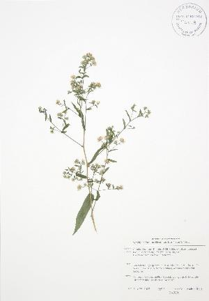 ( - BAR201)  @11 [ ] Copyright (2009) Steven Newmaster University of Guelph BIO Herbarium