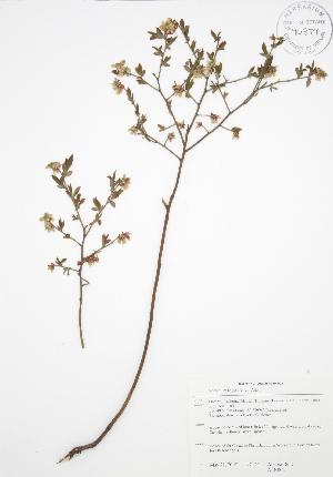 ( - ALR002)  @11 [ ] Copyright (2009) Steven Newmaster University of Guelph BIO Herbarium