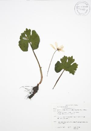 ( - ALR014)  @11 [ ] Copyright (2009) Steven Newmaster University of Guelph BIO Herbarium