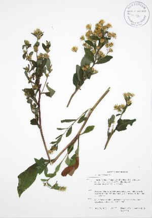 ( - BAR220)  @11 [ ] Copyright (2009) Steven Newmaster University of Guelph BIO Herbarium