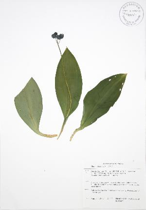 ( - BAR083)  @11 [ ] Copyright (2009) Steven Newmaster University of Guelph BIO Herbarium