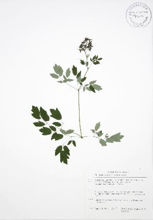 ( - BAR075)  @11 [ ] Copyright (2009) Unspecified University of Guelph BIO Herbarium
