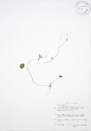 ( - BAR074)  @11 [ ] Copyright (2009) Unspecified University of Guelph BIO Herbarium