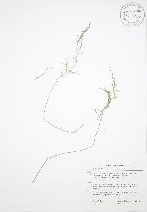 ( - BAR233)  @11 [ ] Copyright (2009) Steven Newmaster University of Guelph BIO Herbarium