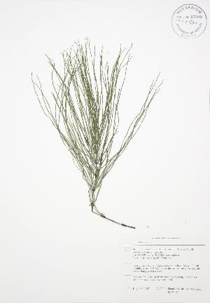 ( - BAR199)  @11 [ ] Copyright (2009) Steven Newmaster University of Guelph BIO Herbarium