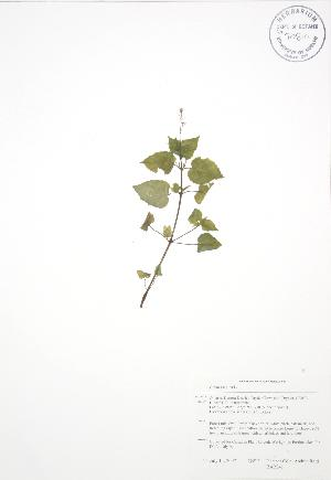 ( - BAR041)  @11 [ ] Copyright (2009) Steven Newmaster University of Guelph BIO Herbarium