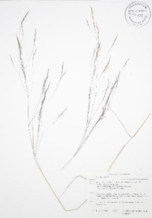 ( - BAR058)  @11 [ ] Copyright (2009) Steven Newmaster University of Guelph BIO Herbarium