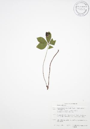 ( - BAR048)  @11 [ ] Copyright (2009) Steven Newmaster University of Guelph BIO Herbarium