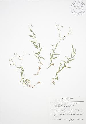 ( - BAR029)  @11 [ ] Copyright (2009) Unspecified University of Guelph BIO Herbarium