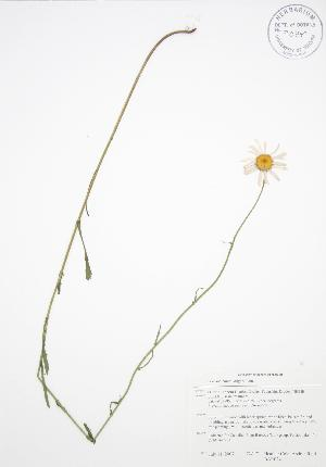 ( - BAR024)  @11 [ ] Copyright (2009) Steven Newmaster University of Guelph BIO Herbarium