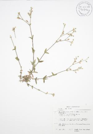 ( - BAR018)  @11 [ ] Copyright (2009) Unspecified University of Guelph BIO Herbarium