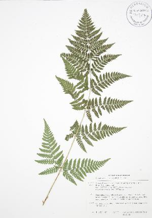 ( - BAR006)  @11 [ ] Copyright (2009) Steven Newmaster University of Guelph BIO Herbarium