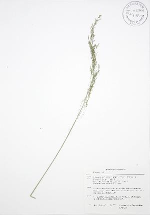 ( - BAR234)  @11 [ ] Copyright (2009) Steven Newmaster University of Guelph BIO Herbarium