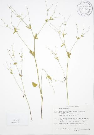 ( - BAR196)  @11 [ ] Copyright (2009) Steven Newmaster University of Guelph BIO Herbarium