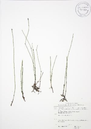 ( - JAG 0382)  @11 [ ] Copyright (2009) Steven Newmaster University of Guelph BIO Herbarium