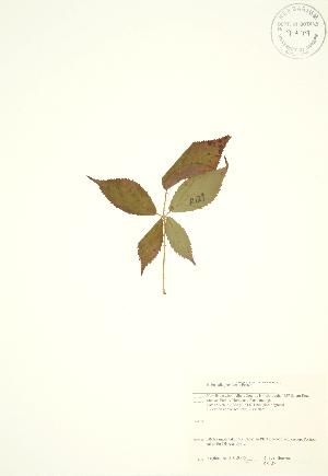 ( - RS127)  @11 [ ] Copyright (2009) Steven Newmaster University of Guelph BIO Herbarium