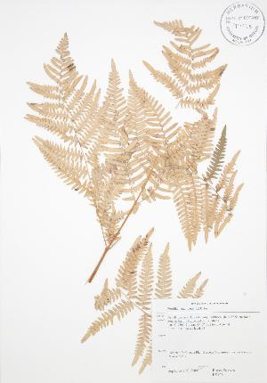 ( - RS126)  @11 [ ] Copyright (2009) Steven Newmaster University of Guelph BIO Herbarium