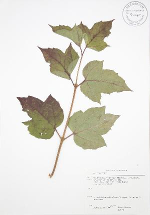 ( - RS131)  @11 [ ] Copyright (2009) Unspecified University of Guelph BIO Herbarium