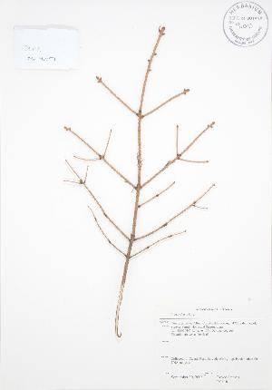 ( - RS118)  @11 [ ] Copyright (2009) Steven Newmaster University of Guelph BIO Herbarium