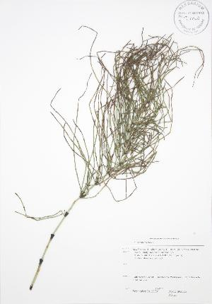 ( - RS123)  @11 [ ] Copyright (2009) Steven Newmaster University of Guelph BIO Herbarium