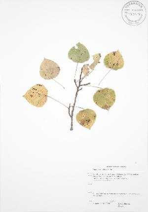 ( - RS137)  @11 [ ] Copyright (2009) Steven Newmaster University of Guelph BIO Herbarium