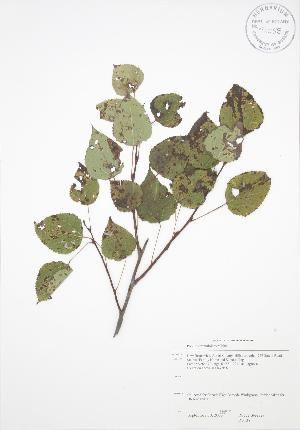 ( - RS138)  @11 [ ] Copyright (2009) Steven Newmaster University of Guelph BIO Herbarium