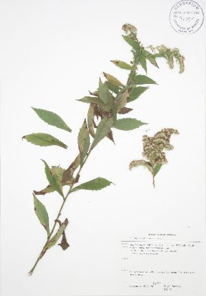( - RS139)  @11 [ ] Copyright (2009) Steven Newmaster University of Guelph BIO Herbarium