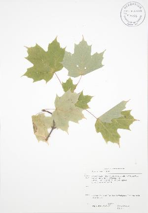 ( - RS130)  @11 [ ] Copyright (2009) Steven Newmaster University of Guelph BIO Herbarium