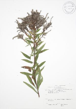 ( - RS133)  @11 [ ] Copyright (2009) Steven Newmaster University of Guelph BIO Herbarium