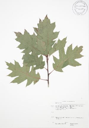 ( - RS134)  @11 [ ] Copyright (2009) Steven Newmaster University of Guelph BIO Herbarium