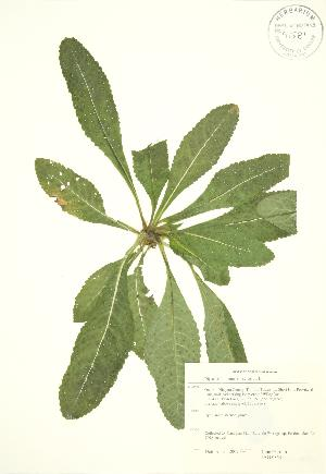 ( - JAG 0854)  @11 [ ] Copyright (2009) Steven Newmaster University of Guelph BIO Herbarium