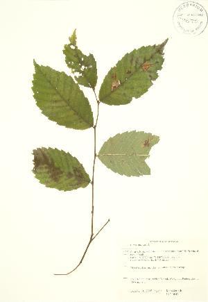 ( - JAG 0847)  @11 [ ] Copyright (2009) Steven Newmaster University of Guelph BIO Herbarium