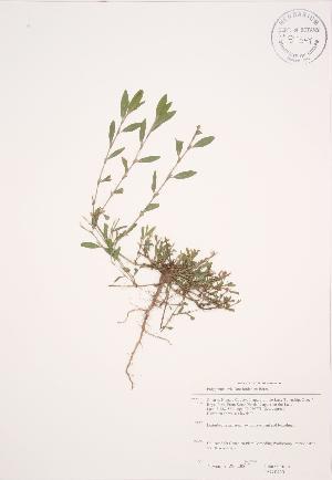 ( - JAG 0430)  @11 [ ] Copyright (2009) Unspecified University of Guelph BIO Herbarium