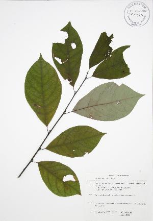 ( - JAG 0841)  @11 [ ] Copyright (2009) Steven Newmaster University of Guelph BIO Herbarium