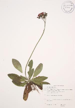 ( - JAG 0193)  @11 [ ] Copyright (2009) Steven Newmaster University of Guelph BIO Herbarium