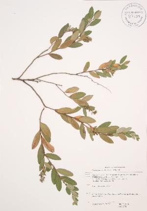 ( - JAG 0178)  @11 [ ] Copyright (2009) Steven Newmaster University of Guelph BIO Herbarium