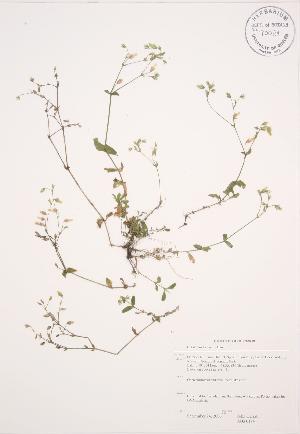 ( - JAG 0194)  @11 [ ] Copyright (2009) Steven Newmaster University of Guelph BIO Herbarium