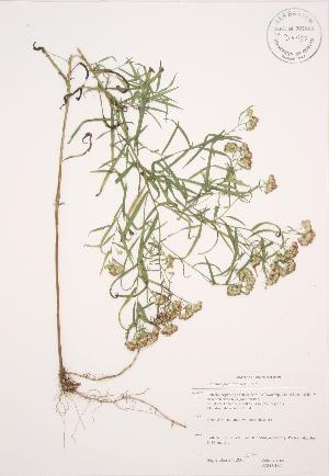 ( - JAG 0197)  @11 [ ] Copyright (2009) Unspecified University of Guelph BIO Herbarium
